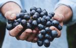 Есть виноград во сне сонник