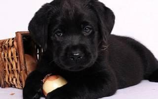 К чему снится черный щенок сонник