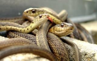 Сонник увидеть змею во сне