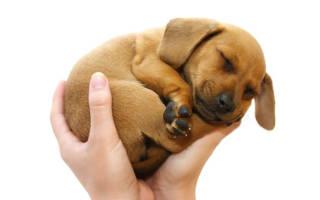 Во сне держать собаку на руках сонник