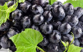 Видеть во сне черный виноград сонник