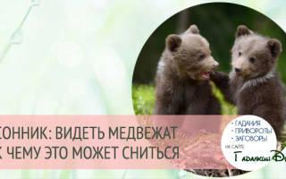 К чему снится медведица с медвежатами мужчине сонник