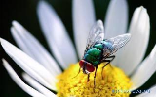 Видеть во сне мух сонник