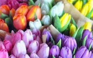 Сонник белые тюльпаны