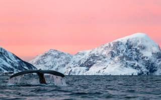 К чему снится кит в воде сонник