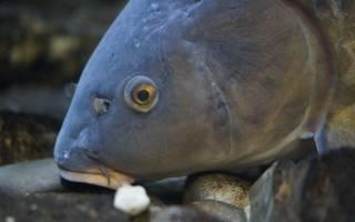 Голова рыбы во сне сонник