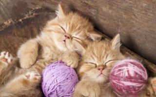 Сонник к чему снятся котята