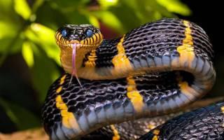 Видеть во сне змею исламский сонник