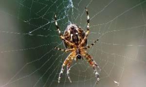 К чему снятся пауки и тараканы сонник