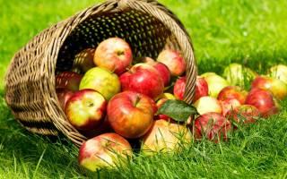 К чему снится яблоня с большими яблоками сонник