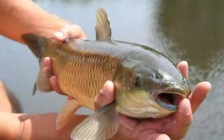 Видеть во сне ловить рыбу руками сонник