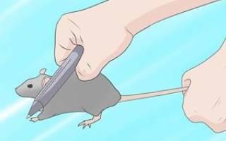 Видеть во сне мышей и убивать их сонник