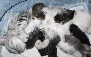 Сонник кошка родила котят много