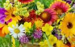 К чему снятся цветы живые сонник