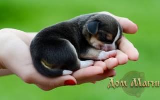 К чему снится маленькая рыжая собачка сонник