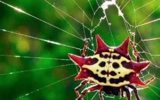 К чему снится паук тарантул сонник