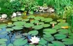 К чему снится пруд с чистой водой сонник