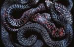 Сонник к чему снятся змеи много