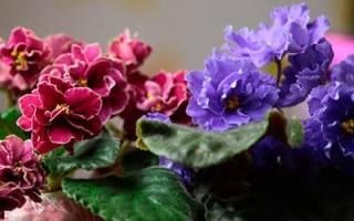 Видеть во сне комнатные цветы сонник