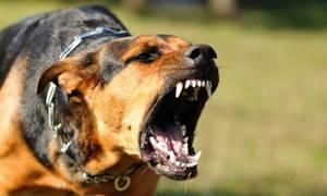 К чему снится летающая собака сонник