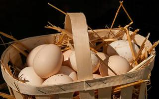 К чему снятся куриные яйца во сне сонник