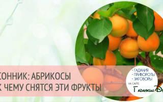 Видеть во сне абрикосы сонник