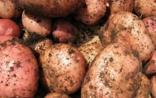 Если снится картошка что это значит сонник