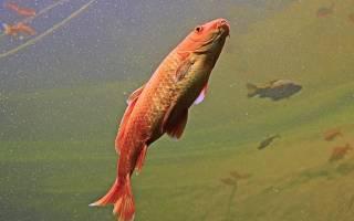 К чему снится большая черная рыба сонник