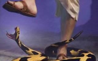 К чему снится укус змеи в ногу сонник