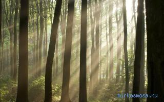 Видеть во сне лес сонник