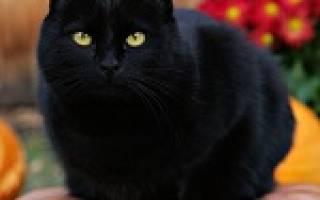 Видеть во сне черную кошку сонник
