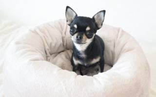 К чему снится маленькая собака женщине сонник