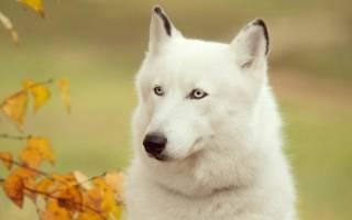 К чему снится ехать верхом на собаке сонник