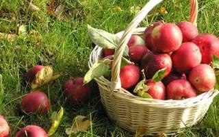 Собирать яблоки во сне что значит сонник