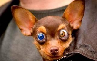 К чему снится большая собака которая нападает сонник