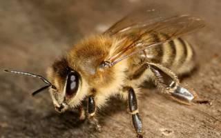 Видеть во сне пчел сонник